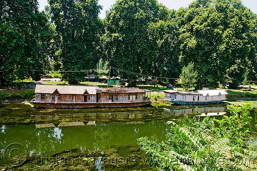house boats - srinagar - kashmir, floating, house boats, kashmir, lake, srinagar, trees, water, سِرېنَگَر, شرینگر, श्रीनगर