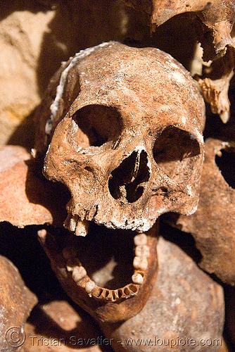human skull in the catacombs of paris, bone, dead, human remains, ossuary, skeletal remains, skeleton, underground quarry
