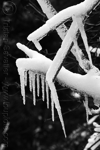 icicles on branches, branches, frozen, ice, icicles, snow, tree, winter, yosemite national park