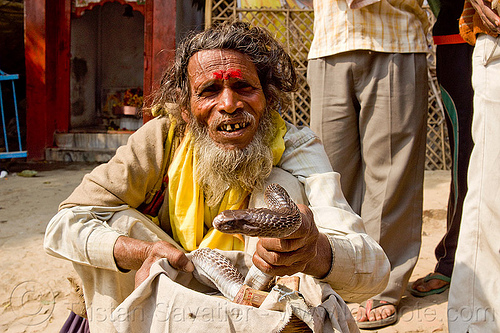 indian snake handler with cobra, basket, beard, cobra snake, hindu, hinduism, holding, kumbh mela, kumbha mela, maha kumbh, maha kumbh mela, man, old man, paush purnima, people, reptile, sitting, snake charmer, street performer, tilak, tilaka