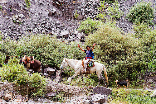 indigenous man riding horse to the village (argentina), argentina, hiking, horse-riding, horseback riding, iruya, man, noroeste argentino, pony, quebrada de humahuaca, river bed, san isidro, trail, trekking, white horse