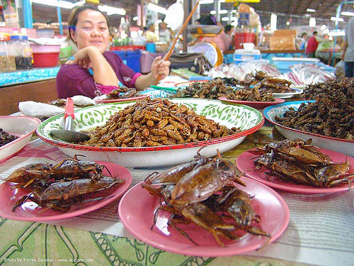 insects - giant waterbugs - market - food - thailand, edible bugs, edible insects, entomophagy, food, giant water bugs, larva, larvae, merchant, thailand, vendor