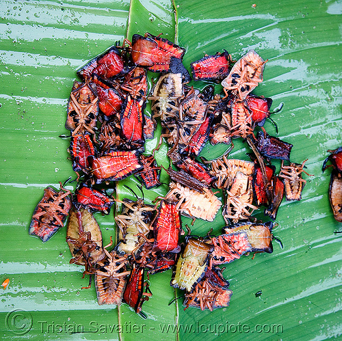 insects on the market - bugs - food, alive, eating bugs, eating insects, edible bugs, edible insects, entomophagy, food, green, live, luang prabang, market