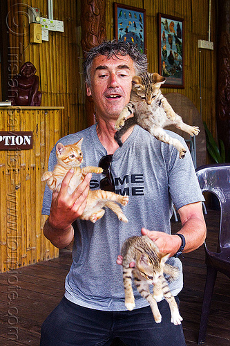 juggling with kittens, borneo, cat juggling, cats, flying, ginger kitten, juggler, kittens, mackerel tabby, malaysia, man, self portrait