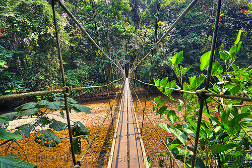 jungle monkey bridge (borneo), borneo, cables, gunung mulu national park, hiking, jungle, knots, lumber, malaysia, melinau river, pedestrian bridge, plants, rain forest, river bed, ropes, sungai melinau, suspension bridge, trees, trekking, vanishing point