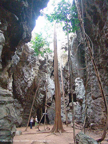 karstic area - tree growing in deep hole - thailand, karst, karstic, tree, wonder cave, ประเทศไทย
