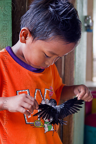 kid playing with baby bird, boy, child, madai, madai caves, people, swiftlet, wings