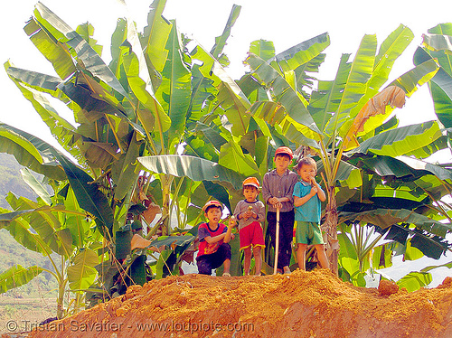 kids and banana trees - vietnam, children, hill tribes, indigenous, kids, vietnam