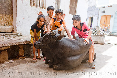kids playing with bull - udaipur (india), bull, children, kids, street cow, udaipur