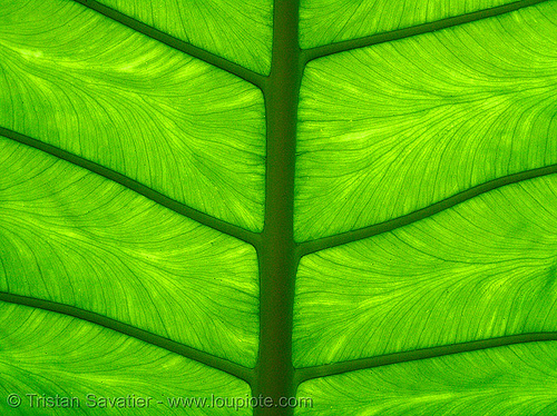98154647-green-leaf - Lunhaw - Photos Unlimited
