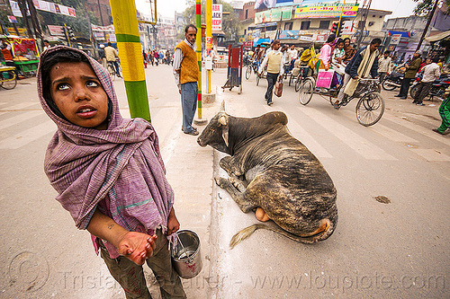 little girl begging near holy bull (india), beggar, begging, bull, child, india, kid, lying down, resting, street cow, varanasi