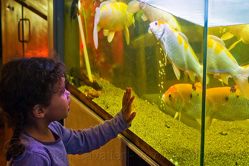 little girl looking at goldfishes in aquarium, aquarium, child, fish tank, fishes, goldfishes, hand, kid, little girl, paris, touching