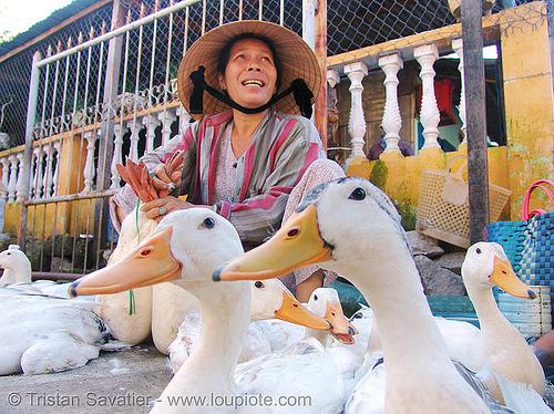 geese - vietnam, birds, goose, hoi an, hội an, market, merchant, people, poultry, street market, vendor