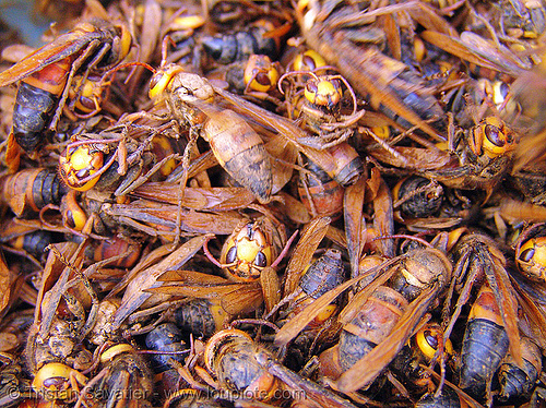 live wasps on the market - vietnam, cao bằng, edible bugs, edible insects, entomophagy, food, vietnam, wasps