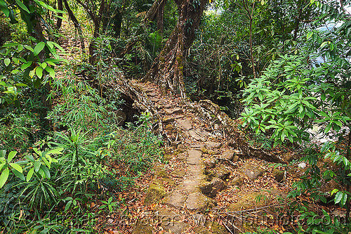 living root bridge over small stream near mawlynnong (india), banyan, east khasi hills, ficus elastica, footbridge, india, jungle, living root bridge, mawlynnong, meghalaya, rain forest, roots, strangler fig, trail, trees