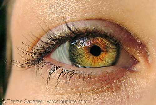 liza's eye with hazel / rusty iris, close up, eye color, hazel, iris, liz, liza, macro, pupil, right eye, woman