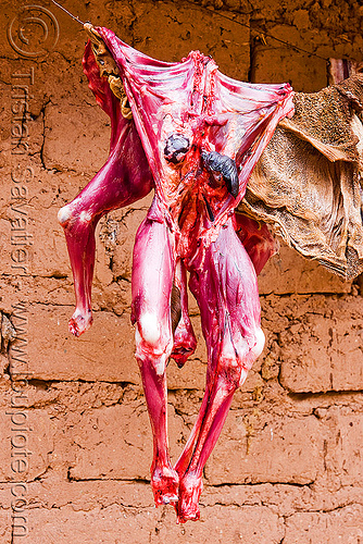 llama meat - carcass, abra el acay, acay pass, argentina, carcass, dead, llama meat, noroeste argentino, raw meat, skinned, slaughtered