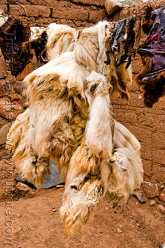 llama skin with wool, abra el acay, acay pass, drying, line, llama, noroeste argentino, skin, tanning, wool