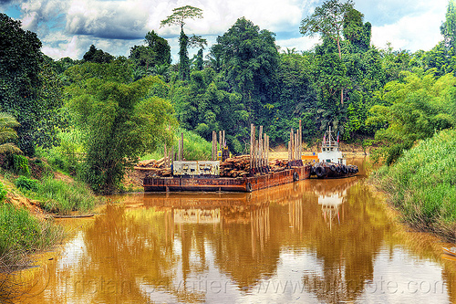 logging barge on muddy river, boat landing, clouds, cloudy sky, deforestation, environment, jungle, logging barge, muddy river, rain forest, river barge, tow boat, tree logging, tree logs, tree trunks, water