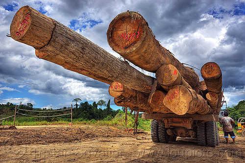logging truck (borneo), borneo, clouds, cloudy sky, deforestation, environment, logging camp, logging truck, lorry, malaysia, man, rain forest, tree logging, tree logs, tree trunks, worker