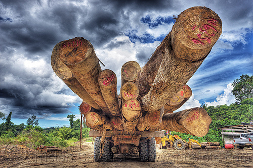 logging truck with huge logs of tropical trees (borneo), borneo, clouds, cloudy sky, deforestation, environment, logging camp, logging truck, lorry, malaysia, rain forest, tree logging, tree logs, tree trunks