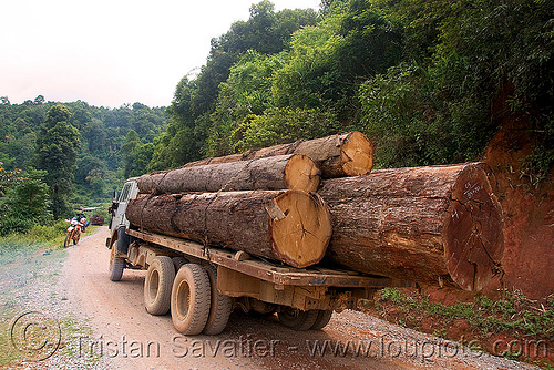 logging truck with large tree logs (laos), 250cc, convoy, deforestation, dirt road, honda motorcycle, honda xr 250, laos, log truck, logging trucks, lorry, timber, touring, tree logging, tree logs, trees, unpaved, wood