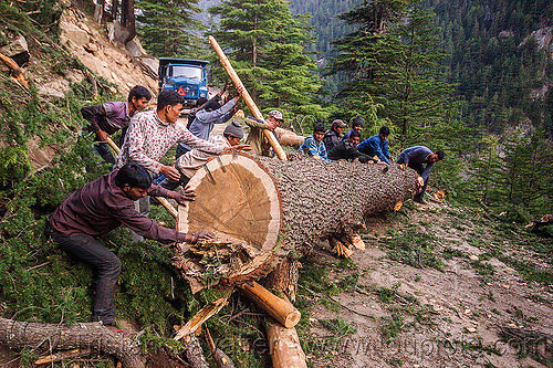 lumberjacks rolling tree log (india), bhagirathi valley, lumberjacks, men, mountain road, mountains, pushing, rolling, tree log, tree logging, trunk, workers, working