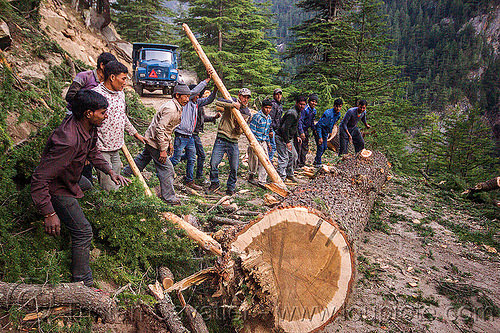 lumberjacks using lever to roll tree log (india), bhagirathi valley, logging, men, mountain road, mountains, people, rolling, tree logging, trunk, workers, working
