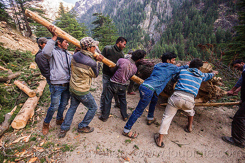 lumberjacks using lever to roll tree log (india), bhagirathi valley, lumberjacks, men, mountain road, mountains, pushing, rolling, tree log, tree logging, trunk, workers, working