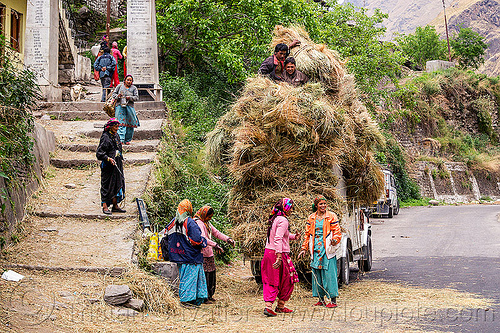 mahendra jeep overloaded with hay (india), car, cargo, dhauliganga valley, freight, hay, india, jeep, load, loading, mahindra, men, mountains, overloaded, raini chak lata, road, stairs, steps, village, women