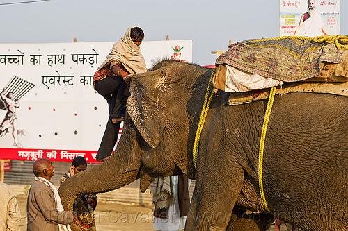 mahout climbing on elephant trump (india), climb, elephant riding, kumbh mela, kumbha mela, maha kumbh, maha kumbh mela, man, people, street