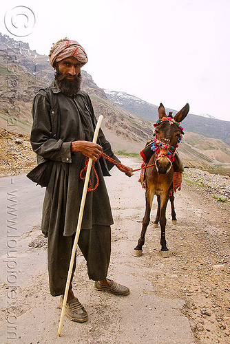 man and his pony - drass valley - leh to srinagar road - kashmir, cane, dras valley, drass valley, horse, india, kashmir, kashmiri gujjars, mountains, muslim, nomads, pony, road, zoji la, zoji pass, zojila pass