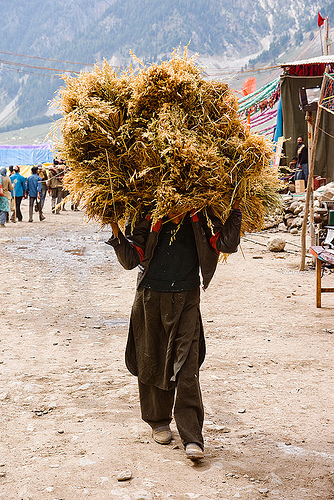 man carrying a ball of hay - amarnath yatra (pilgrimage) - kashmir, amarnath yatra, bearer, hay, hiking, hindu pilgrimage, india, kashmir, load, mountain trail, mountains, pilgrim, pony-man, porter, trekking, wallah