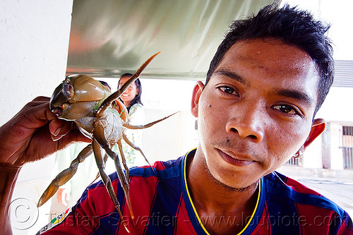 man with crab, borneo, fish market, food, malaysia, man, merchant, portunidae, seafood, swimmer crab, vendor