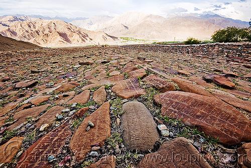 mani stones - ladakh (india), carved, hemis gompa, ladakh, mani stones, mani wall, prayer stone wall, prayer stones, tibetan monastery