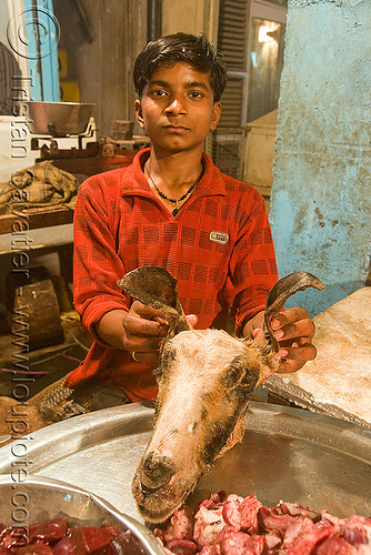 meat shop - goat meat - butcher - delhi (india), butcher, chevon, delhi, goat head, goat meat, halal meat, meat market, meat shop, mutton, raw meat