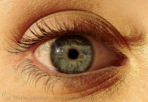 megan's eye, close up, eye color, eyelashes, iris, macro, pupil, right eye, woman