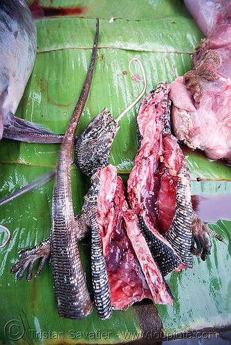 monitor lizard meat, bayawak, faniyas, giant lizard, hilay, luang prabang, market, meat market, meat shop, raw, raw meat, reptile, varanidae, varanus