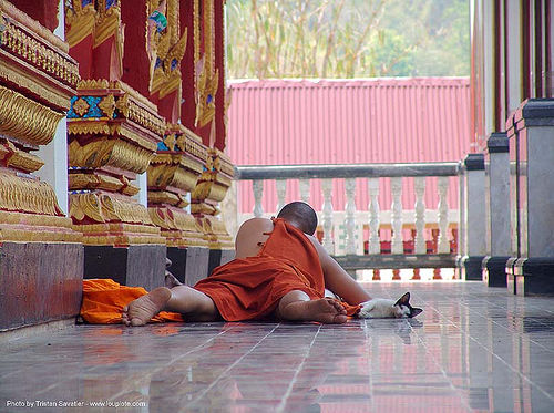 monk and cat in wat - สังขละบุรี - sangklaburi - thailand, bhagwa, people, saffron color, temple, ประเทศไทย, สังขละบุรี
