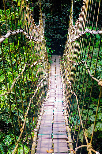 monkey bridge in the jungle, borneo, cables, gunung mulu national park, hiking, jungle, knots, lumber, malaysia, melinau river, pedestrian bridge, plants, rain forest, ropes, sungai melinau, suspension bridge, trees, trekking, vanishing point