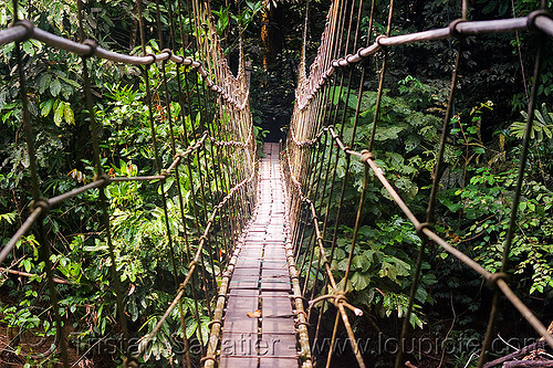 monkey bridge, cables, forest, gunung mulu, gunung mulu national park, jungle, knots, lumber, melinau, melinau river, pedestrian bridge, plants, rain forest, ropes, sungai melinau, suspension bridge, trees, trekking, vanishing point, water
