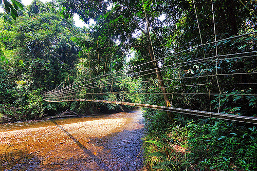monkey bridge over river, borneo, gunung mulu national park, hiking, jungle, malaysia, melinau river, monkey bridge, pedestrian bridge, plant, rain forest, sungai melinau, suspension bridge, trekking