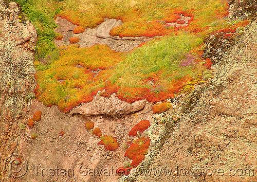 moss, grass, moss, rock, българия