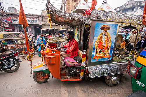 motor rickshaw transporting holy cows (india), auto rickshaw, decorated, holy cow, india, sai baba, traffic, varanasi