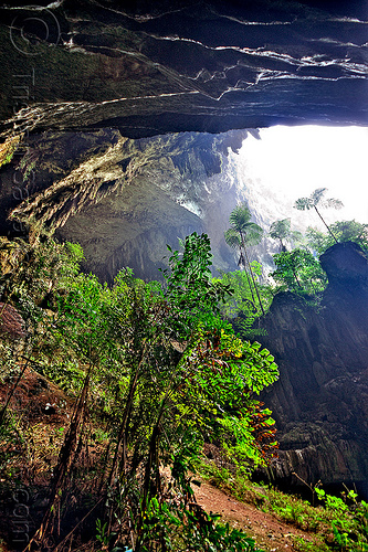 the mouth of deer cave - mulu (borneo), backlight, cave mouth, caving, deer cave, ferns, gunung mulu national park, jungle, natural cave, rain forest, spelunking, trees