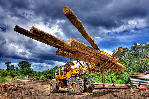 moving tree logs - caterpillar 966C with logging fork, at work, borneo, cat 966c, caterpillar 966c, clouds, cloudy sky, deforestation, environment, front loader, logging camp, logging forks, malaysia, tree logging, tree logs, tree trunks, wheel loader, working, yellow