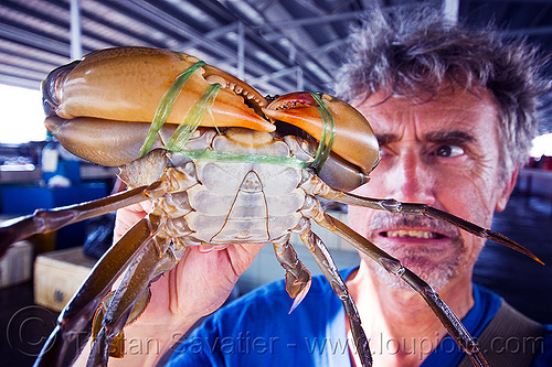 mud crab, claws, fish market, food, legs, man, mangrove crab, mud crab, portunidae, scylla crab, seafood, self portrait, selfie, swimmer crab, tristan savatier