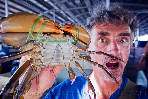 mud crab - mangrove crab, claws, fish market, food, legs, man, mangrove crab, mud crab, portunidae, scylla crab, seafood, self portrait, selfie, swimmer crab, tristan savatier