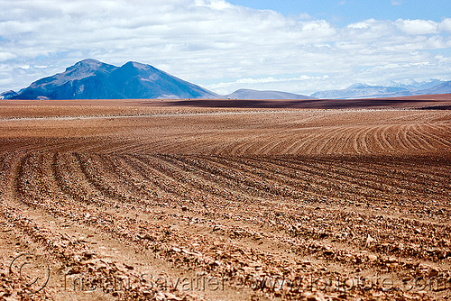 multiple dirt tracks in the high desert (bolivia), altiplano, bolivia, dirt roads, environment, pampa, ruts, unpaved