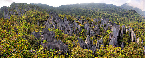 the mulu pinnacles (borneo), erosion, geology, gunung mulu national park, hill, jungle, karst, karstic, limestone, mountain, panorama, pinnacles, rain forest, rock, stitched, stone